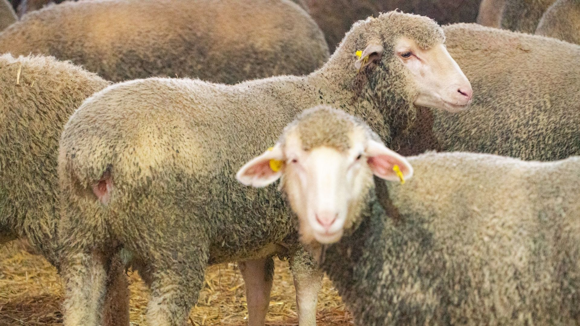 Investing in Livestock Farms